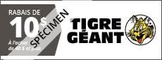 Tigre Géant